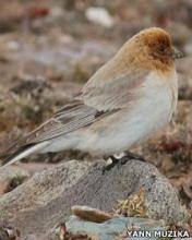 Un encuentro fortuito devolvió al pájaro al ámbito científico.